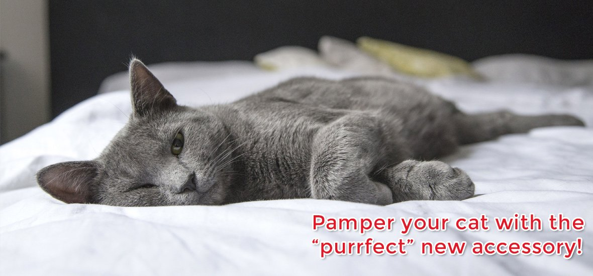 """Pamper your cat with the """"purrfect"""" new accessory"""