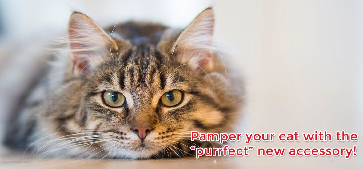 "Pamper your cat with the ""purrfect"" new accessory"